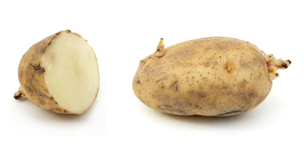 How To Plant Potatoes From Eyes How To Grow Potatoes